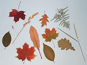 Blätter Pressen blätter pressen und sammeln kreativraum24