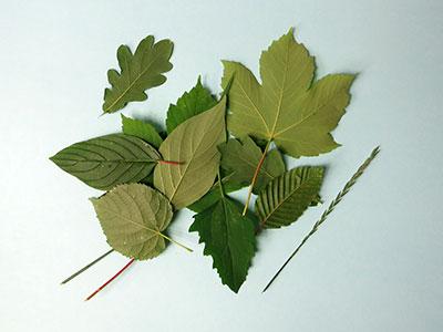 Blätter für embossing Bild