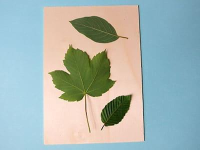 Blätter auf Hintergrund arrangieren