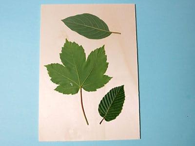 Aufgeklebte Blätter