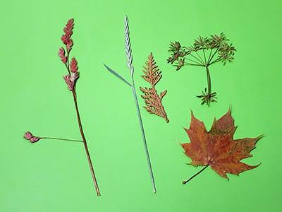 Getrocknete Blätter und Gräser